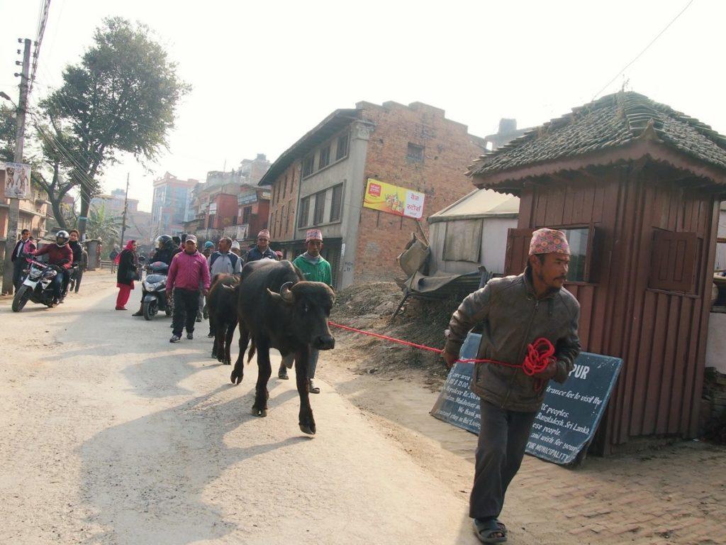 Транспорт в Катманду Непал