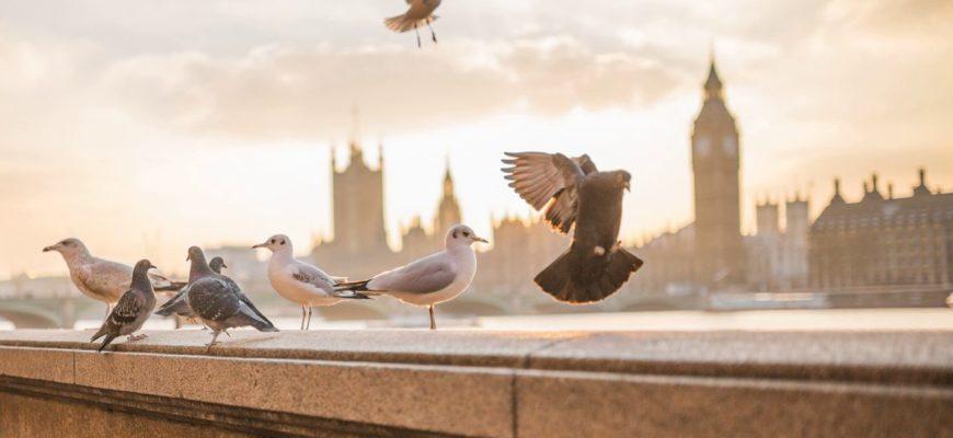 Места вдоль Темзы в Лондоне